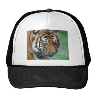 Hi-Res Malay Tiger Close-up Trucker Hat