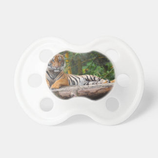 Hi-Res Malay Tiger Lounging on Log Baby Pacifiers