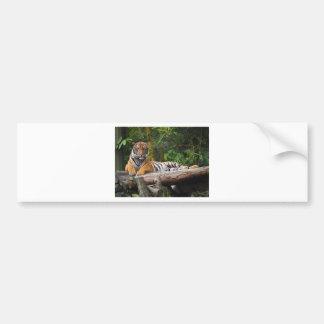 Hi-Res Malay Tiger Lounging on Log Bumper Sticker