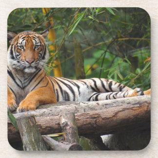 Hi-Res Malay Tiger Lounging on Log Coaster