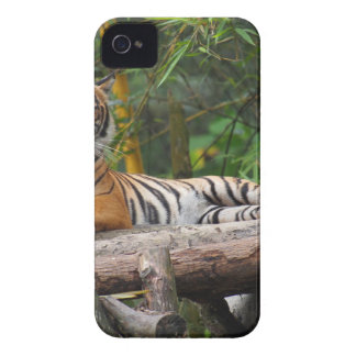 Hi-Res Malay Tiger Lounging on Log iPhone 4 Case