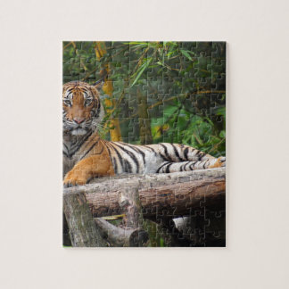 Hi-Res Malay Tiger Lounging on Log Jigsaw Puzzle
