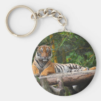 Hi-Res Malay Tiger Lounging on Log Keychain