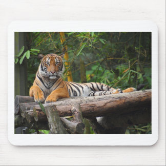 Hi-Res Malay Tiger Lounging on Log Mouse Pad