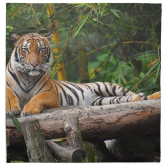 Hi-Res Malay Tiger Lounging on Log Napkin