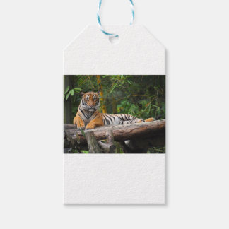Hi-Res Malay Tiger Lounging on Log Pack Of Gift Tags