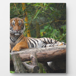 Hi-Res Malay Tiger Lounging on Log Plaque