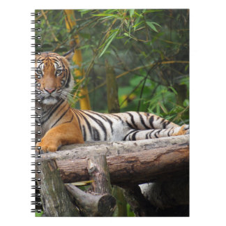 Hi-Res Malay Tiger Lounging on Log Spiral Note Book