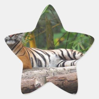 Hi-Res Malay Tiger Lounging on Log Star Sticker