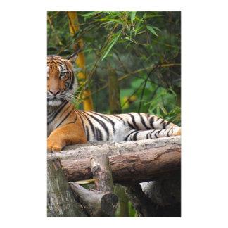 Hi-Res Malay Tiger Lounging on Log Stationery