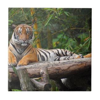 Hi-Res Malay Tiger Lounging on Log Tile