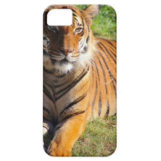 Hi-Res Malayan Tiger Case For The iPhone 5