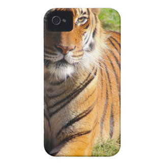 Hi-Res Malayan Tiger iPhone 4 Case-Mate Case