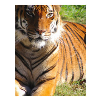 Hi-Res Malayan Tiger Letterhead