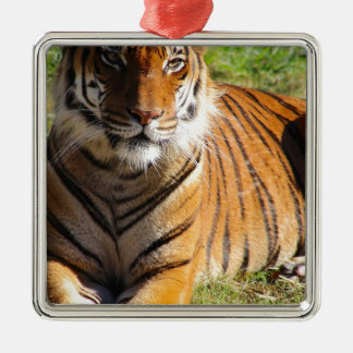 Hi-Res Malayan Tiger Metal Ornament