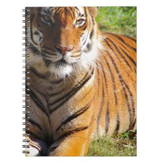 Hi-Res Malayan Tiger Note Book