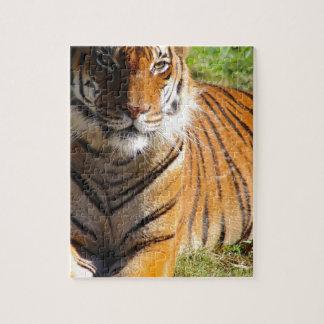 Hi-Res Malayan Tiger Puzzle