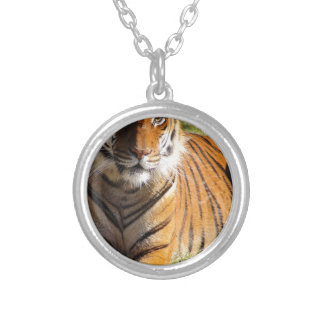 Hi-Res Malayan Tiger Silver Plated Necklace
