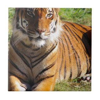 Hi-Res Malayan Tiger Tile