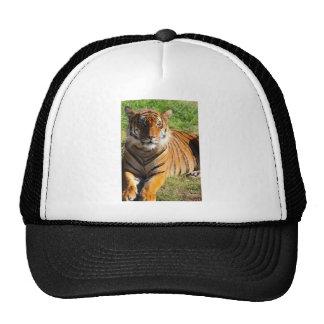 Hi-Res Malayan Tiger Trucker Hat