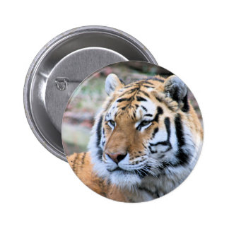 Hi-Res Stoic Royal Bengal Tiger 2 Inch Round Button