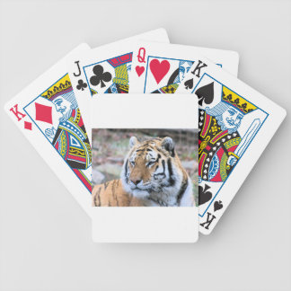 Hi-Res Stoic Royal Bengal Tiger Bicycle Playing Cards