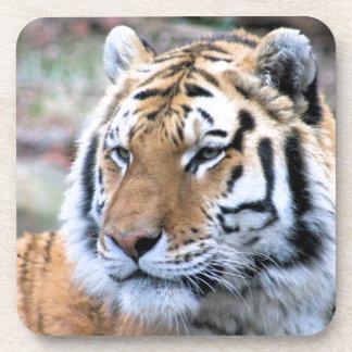 Hi-Res Stoic Royal Bengal Tiger Coaster