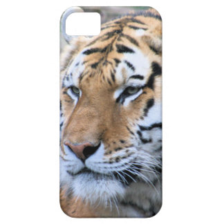Hi-Res Stoic Royal Bengal Tiger iPhone 5 Case