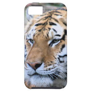 Hi-Res Stoic Royal Bengal Tiger iPhone 5 Covers