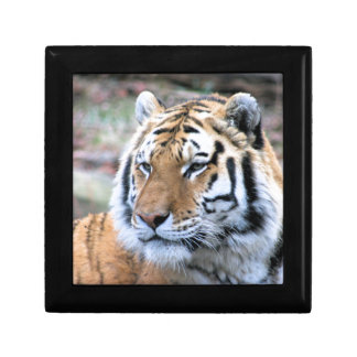 Hi-Res Stoic Royal Bengal Tiger Jewelry Boxes