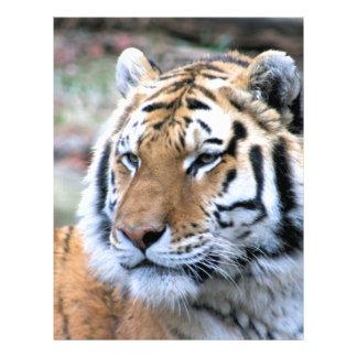 Hi-Res Stoic Royal Bengal Tiger Letterhead