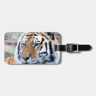 Hi-Res Stoic Royal Bengal Tiger Luggage Tag