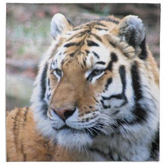 Hi-Res Stoic Royal Bengal Tiger Napkin