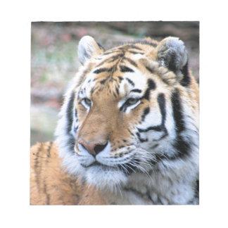 Hi-Res Stoic Royal Bengal Tiger Notepads
