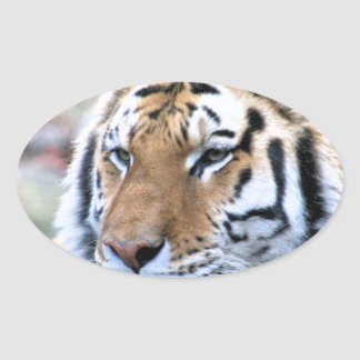 Hi-Res Stoic Royal Bengal Tiger Oval Sticker