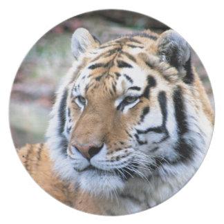 Hi-Res Stoic Royal Bengal Tiger Party Plate