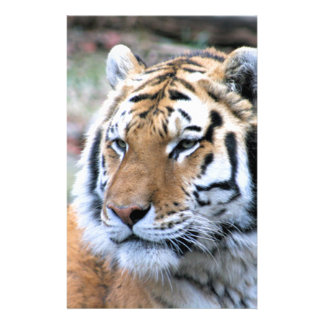 Hi-Res Stoic Royal Bengal Tiger Personalized Stationery