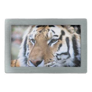 Hi-Res Stoic Royal Bengal Tiger Rectangular Belt Buckle