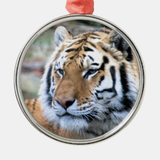 Hi-Res Stoic Royal Bengal Tiger Silver-Colored Round Ornament