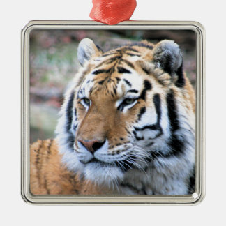 Hi-Res Stoic Royal Bengal Tiger Silver-Colored Square Ornament
