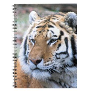 Hi-Res Stoic Royal Bengal Tiger Spiral Notebooks