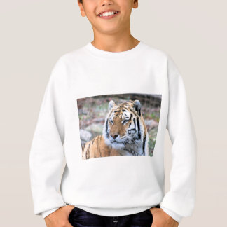 Hi-Res Stoic Royal Bengal Tiger Sweatshirt