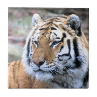 Hi-Res Stoic Royal Bengal Tiger Tile