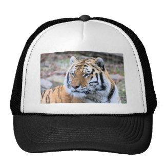 Hi-Res Stoic Royal Bengal Tiger Trucker Hat