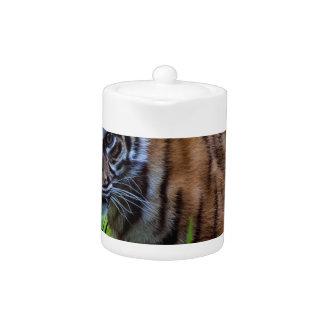 Hi-Res Sumatran Tiger Cub