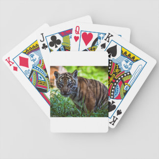Hi-Res Sumatran Tiger Cub Bicycle Playing Cards