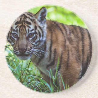 Hi-Res Sumatran Tiger Cub Coaster