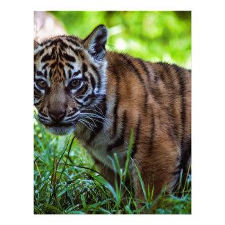 Hi-Res Sumatran Tiger Cub Letterhead