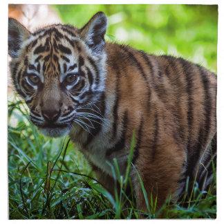 Hi-Res Sumatran Tiger Cub Napkin