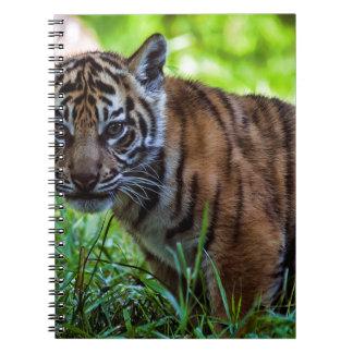 Hi-Res Sumatran Tiger Cub Notebook